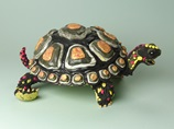 Tortoises--Bones on their Backs lesson plan