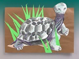 Galapagos: Shells, Scales, & Snakes lesson plan
