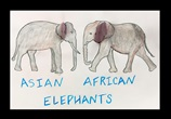 Elephant Ears—African or Asian? lesson plan
